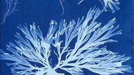 Create your own cyanotype workshop